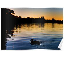 Evening Swim Poster