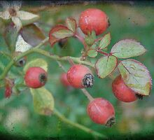 Rosehips by angelandspot