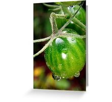 Cherry tomatoes in the rain Greeting Card