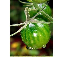 Cherry tomatoes in the rain Photographic Print
