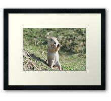 Who pinched my Nuts ! Framed Print