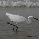 white morph Reddish Egret by Dennis Cheeseman