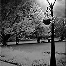 The Lamp by Kym Howard