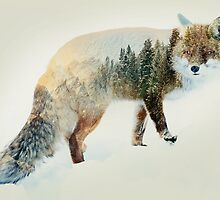 winter fox by vinpez