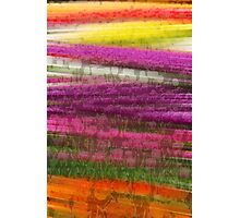 Abstract Tulip Field  Photographic Print