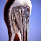 Pelican profile by flstevemck