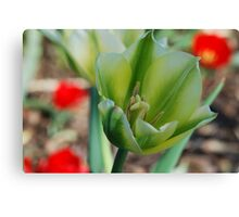 Green Tulip, Red Bokeh Canvas Print