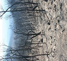 From St Andrews Kinglake Rd after February 7, 2009 by Jeff Hobbs
