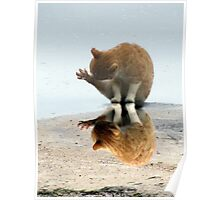 kitty reflection Poster