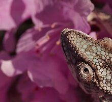 A Panther Chameleon by Milgro12