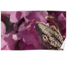 A Panther Chameleon Poster