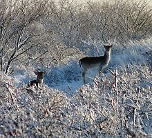 Fallow Deer in the snow 2 by DutchLumix