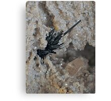Pseudobrookite with Champagne Topaz Canvas Print