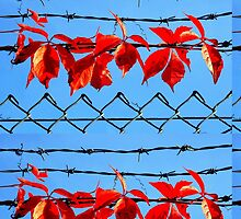 Vine wire by Luke Lansdale