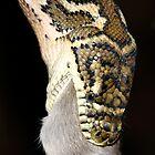 Eastern, Coastal or McDowell's Carpet python  - Morelia spilota mcdowelli by Normf