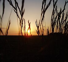 Sunset Through The Reeds by Clickerpic