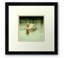 Avian Beauty ~ Part Eleven Framed Print