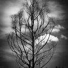 Tree # ... by Carlos Restrepo