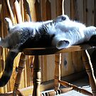 How To Sunbath In A Chair, By Farva by Tracy Wazny