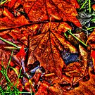 Winter Leaves ~ Port Townsend, WA ~ HDR Series by lanebrain photography