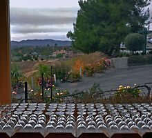 Temecula Vineyard wine tasting room by milton ginos