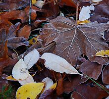 Frosted Leaves by Octoman