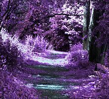 Enchantment Way by DreamForest