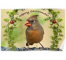 Christmas Greetings from Mrs. Cardinal Poster