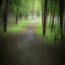 The Trail Into The Woods by Thomas Young