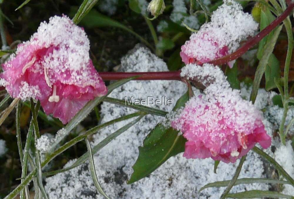 TINY FLOWERS SHROUDED IN SNOW by MaeBelle