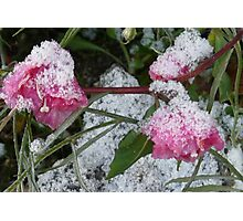 TINY FLOWERS SHROUDED IN SNOW Photographic Print