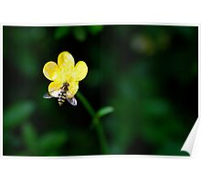 Bee on a Buttercup Poster