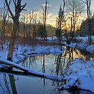 Winter Solstice by Jane Best