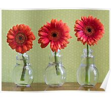 Three Colorful Daisy Flowers In Individual Vases Poster