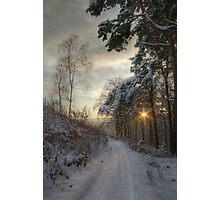 Pirn pines Photographic Print