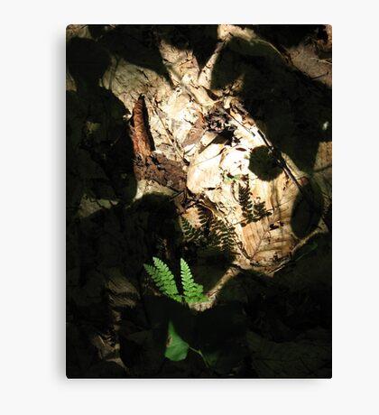 Ferns, Shadows, and Light Canvas Print