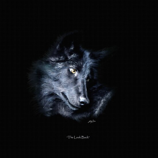 """""""The Look Back"""" Timber Wolf Portrait by Skye Ryan-Evans"""