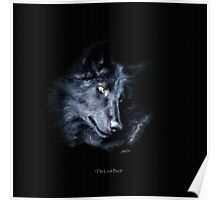 """The Look Back"" Timber Wolf Portrait Poster"