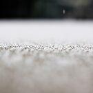 snow flakes by sara montour