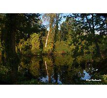 Dismal Swamp Photographic Print