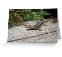 The tubby Skink Greeting Card