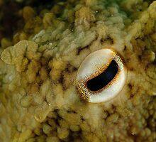 Octopus Eye by Andrew Trevor-Jones