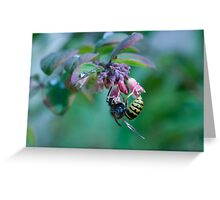 Insect on plant Greeting Card