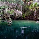 Manatee zone by Ted Petrovits