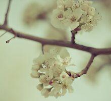 Dogwood Soft Blue by Tia Allor-Bailey