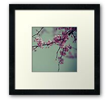 Blooming Pink Framed Print