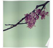 Pink Confetti I Poster