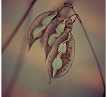 Pods I by Tia Allor-Bailey