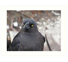 caught in the stare of a raven Art Print