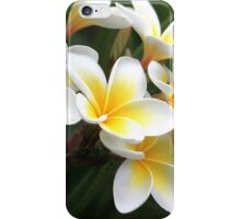frangipani flower iPhone Case/Skin
